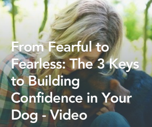 Fearful-to-Fearless